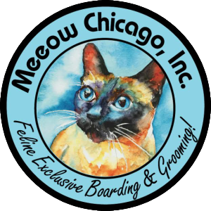 Meeow Chicago